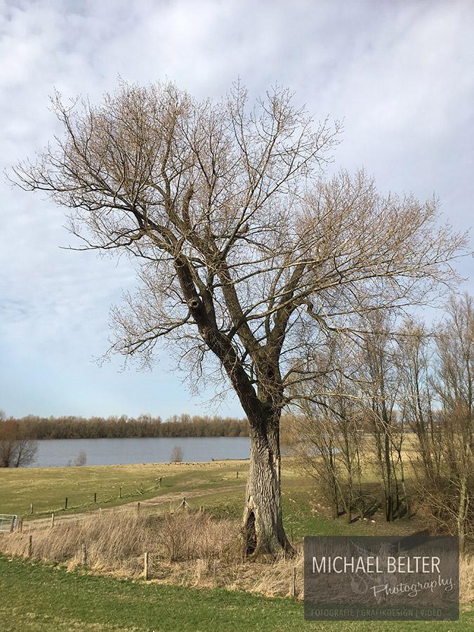 09 Kanada-Pappel Perrich 130-180 Jahre 8,5m Umfang