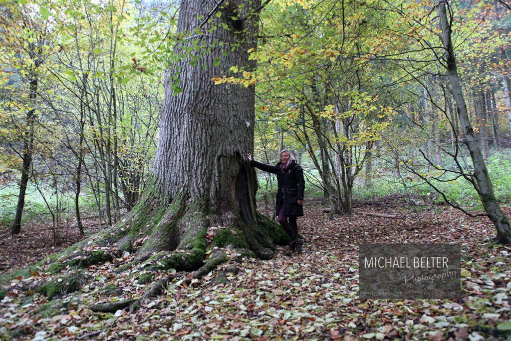 10 Bärenwaldeiche Niederholzklau NRW 650 Jahre 5m Umfang