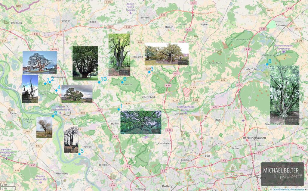 Alte Bäume Niederrhein auf Karte Michael Belter Photography